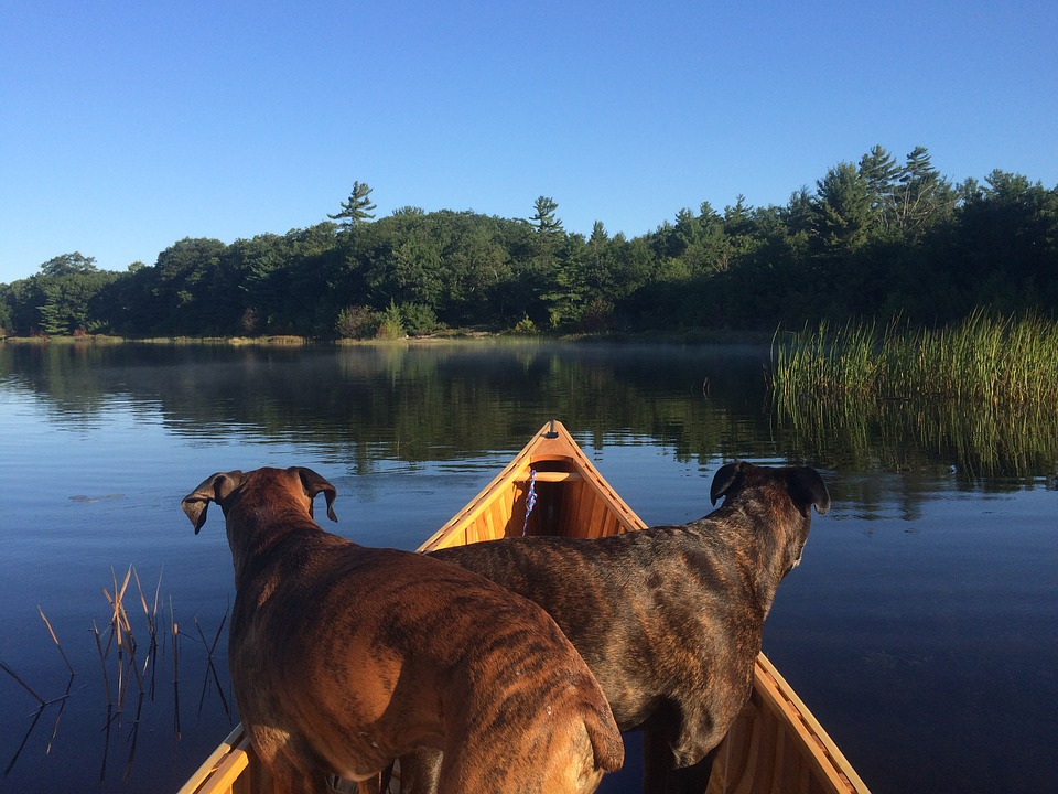 Dogs on a canoe